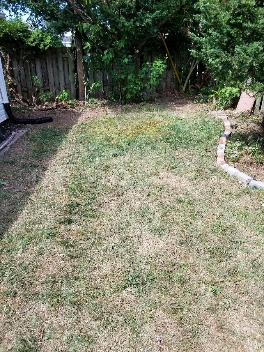 yard waste after image
